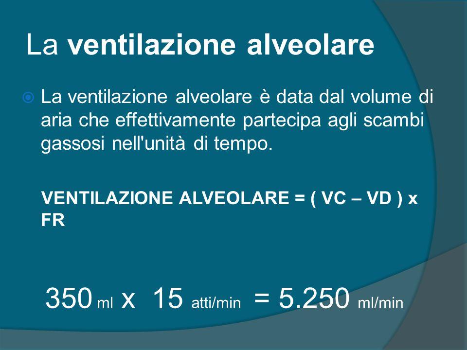 La ventilazione alveolare