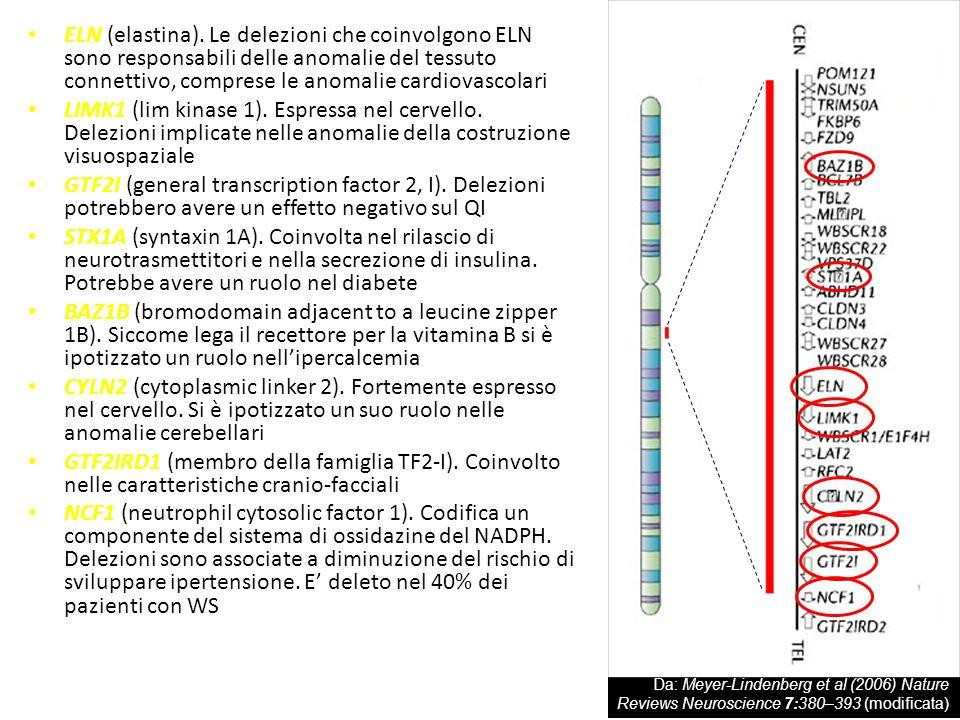 ELN (elastina). Le delezioni che coinvolgono ELN sono responsabili delle anomalie del tessuto connettivo, comprese le anomalie cardiovascolari
