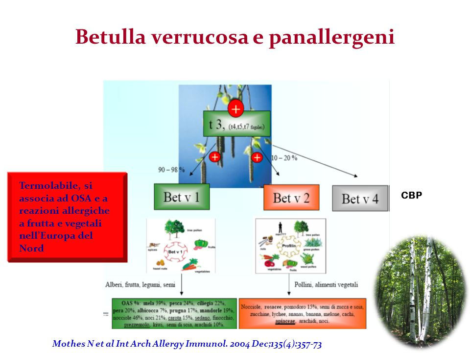 Betulla verrucosa e panallergeni