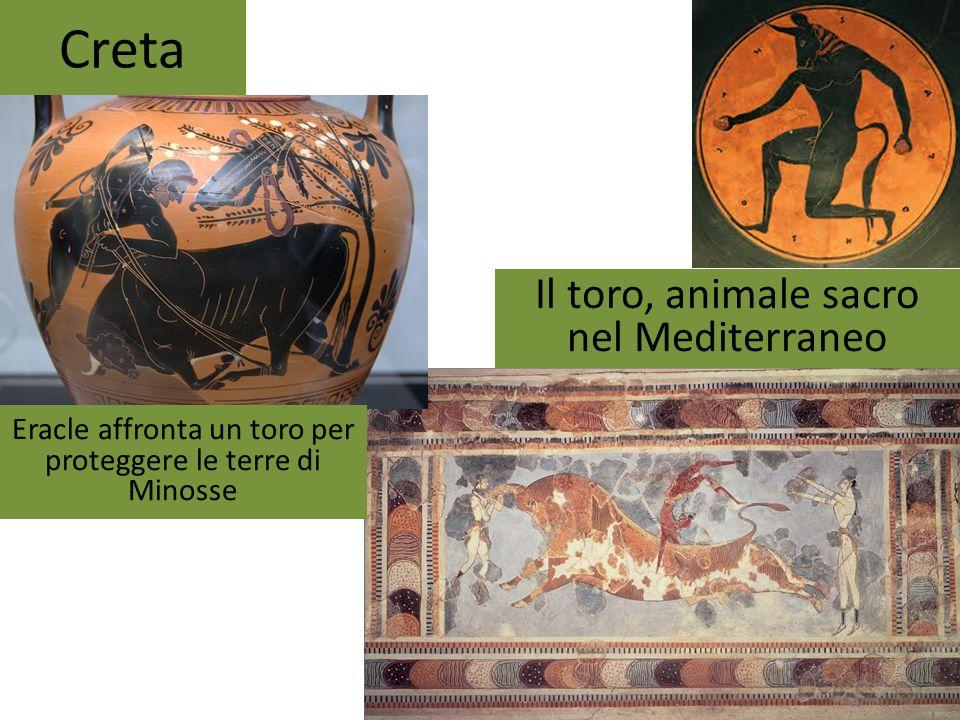 Creta Il toro, animale sacro nel Mediterraneo