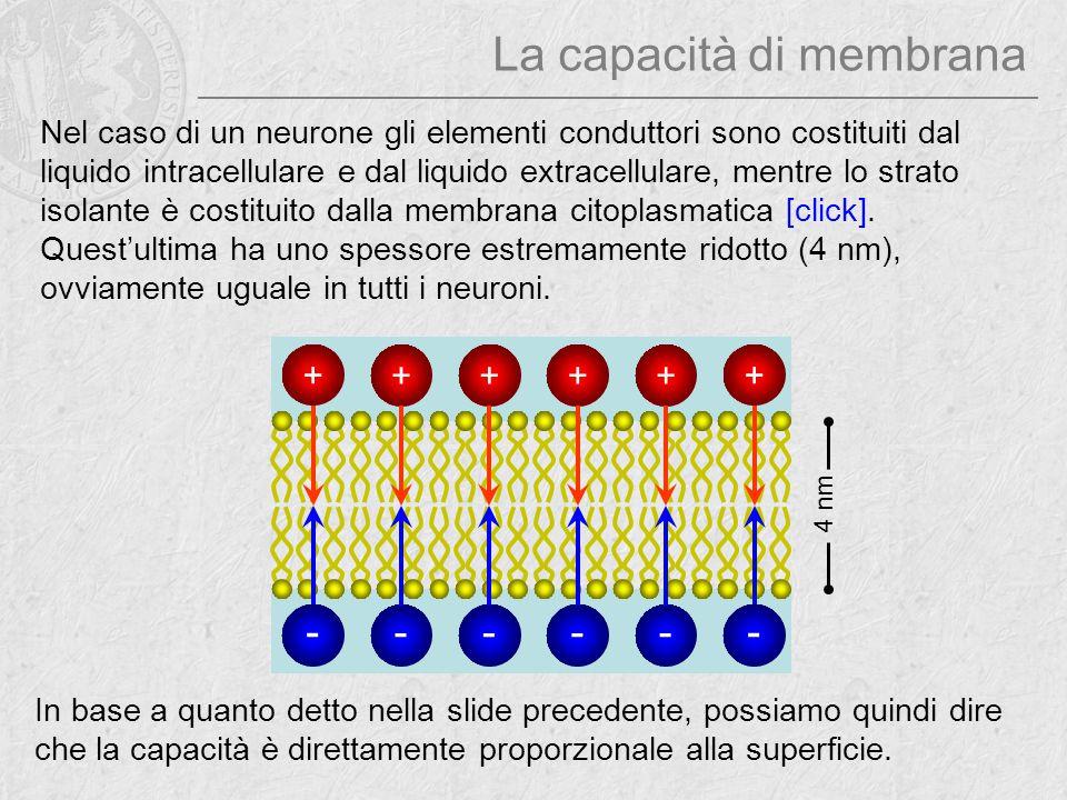 La capacità di membrana