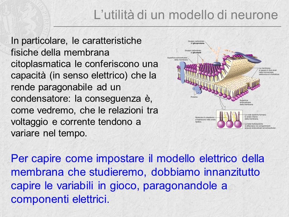 L'utilità di un modello di neurone