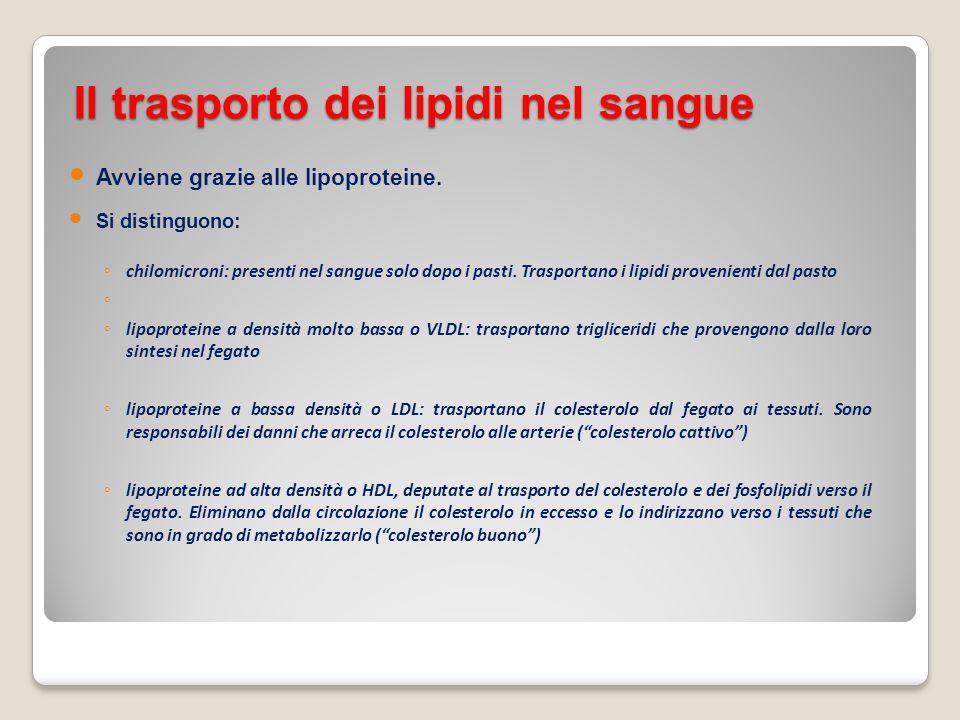Il trasporto dei lipidi nel sangue