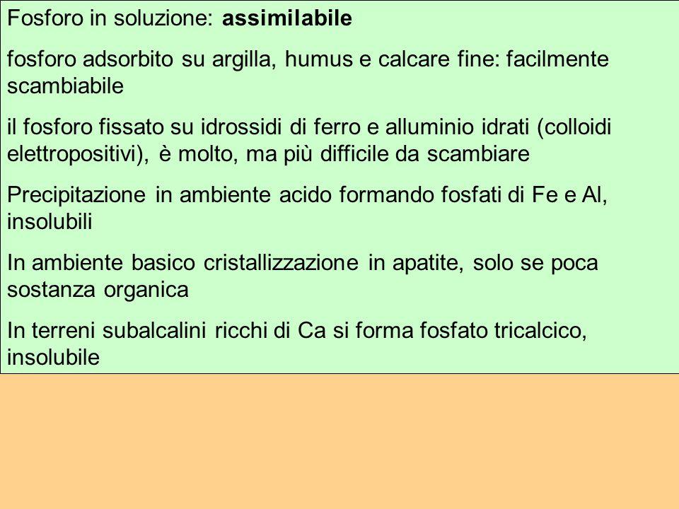 Fosforo in soluzione: assimilabile