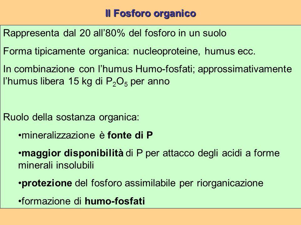 Il Fosforo organico Rappresenta dal 20 all'80% del fosforo in un suolo. Forma tipicamente organica: nucleoproteine, humus ecc.