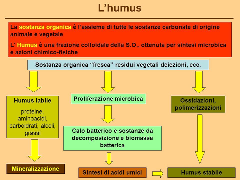 L'humus La sostanza organica è l'assieme di tutte le sostanze carbonate di origine animale e vegetale.