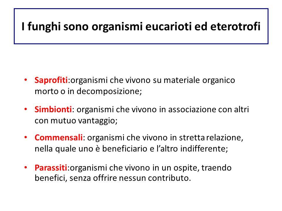 I funghi sono organismi eucarioti ed eterotrofi