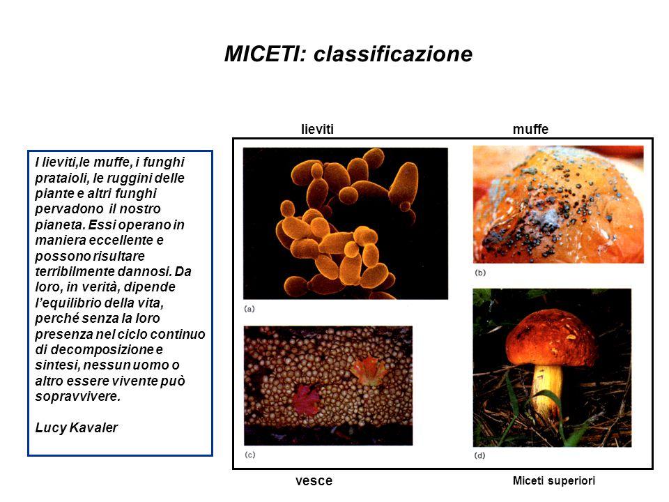 MICETI: classificazione