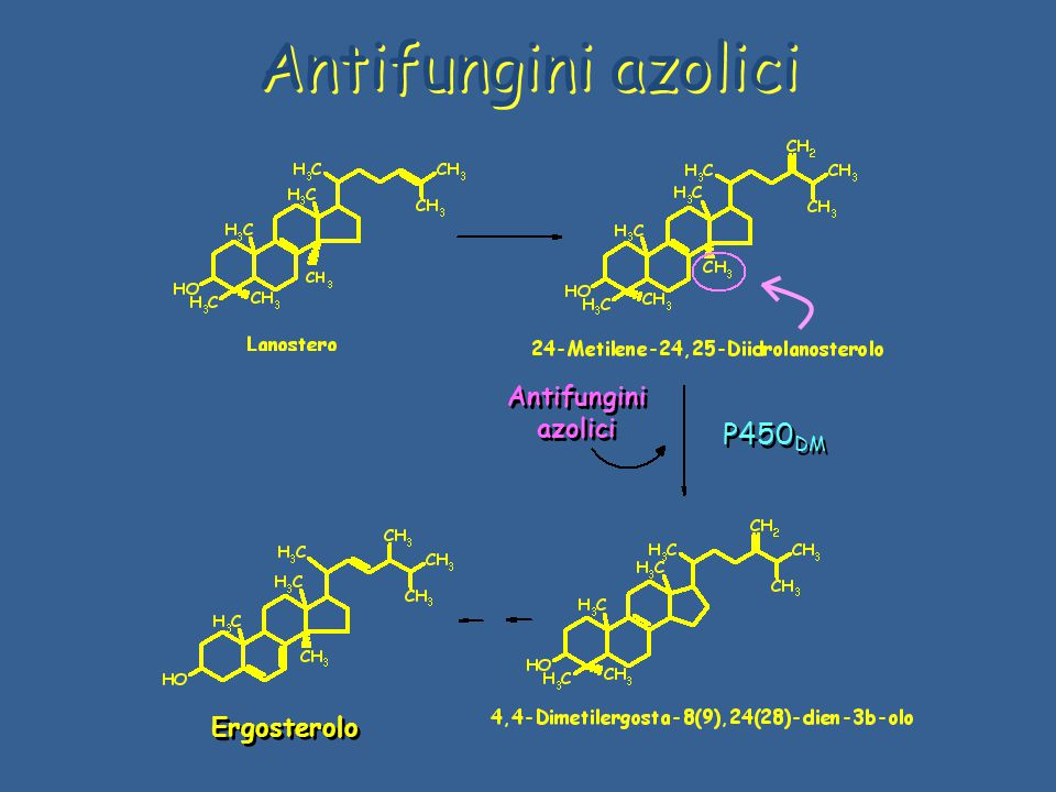 Antifungini azolici Ergosterolo Antifungini azolici P450DM