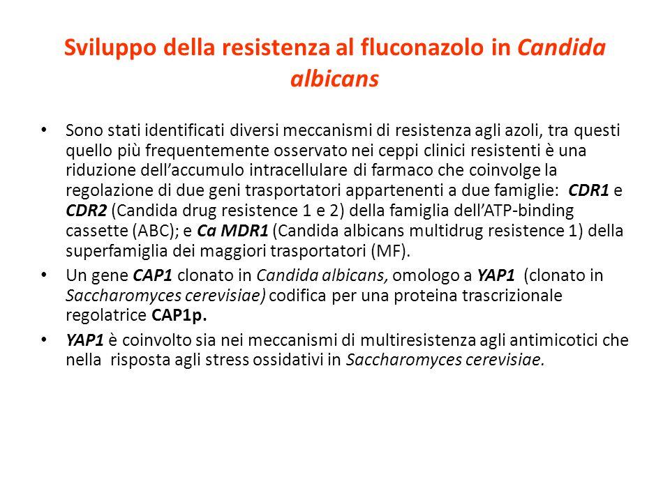 Sviluppo della resistenza al fluconazolo in Candida albicans