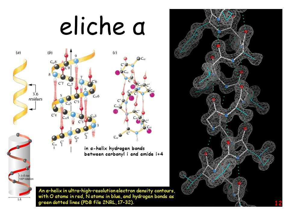 eliche α in α-helix hydrogen bonds between carbonyl i and amide i+4