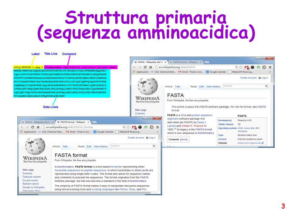 (sequenza amminoacidica)