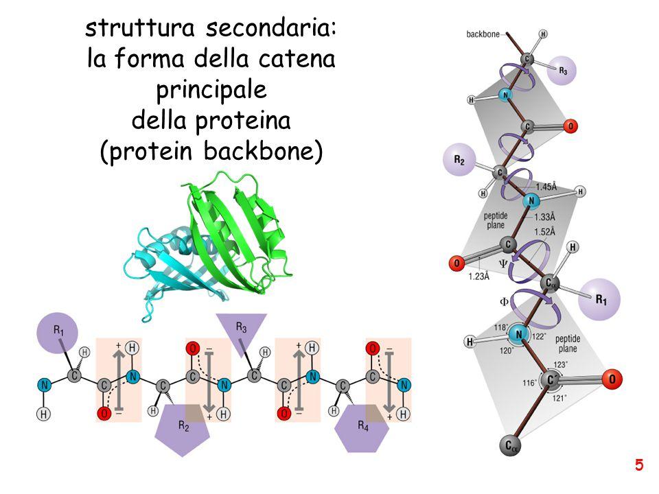 struttura secondaria: la forma della catena principale della proteina