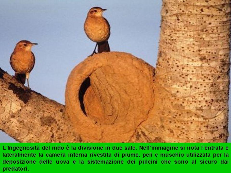 L'Ingegnosità del nido è la divisione in due sale