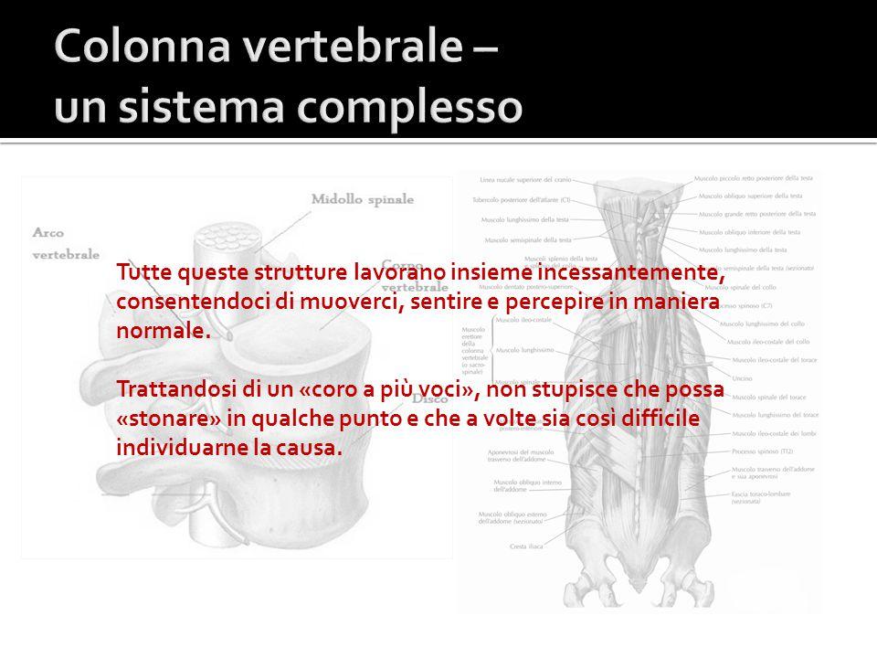 Colonna vertebrale – un sistema complesso