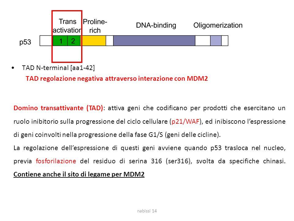 TAD regolazione negativa attraverso interazione con MDM2
