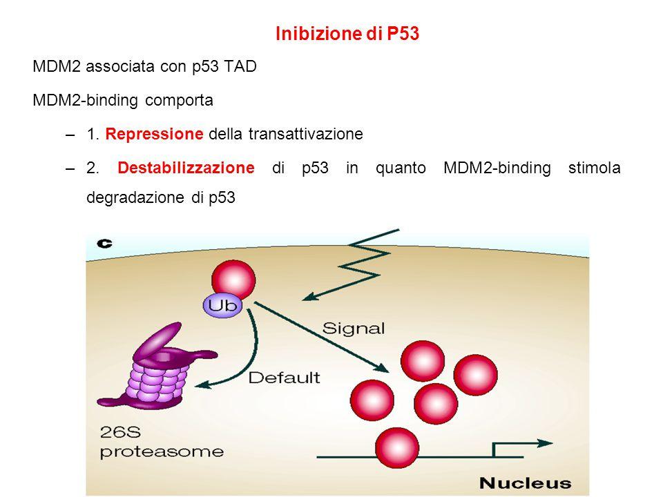 Inibizione di P53 MDM2 associata con p53 TAD MDM2-binding comporta