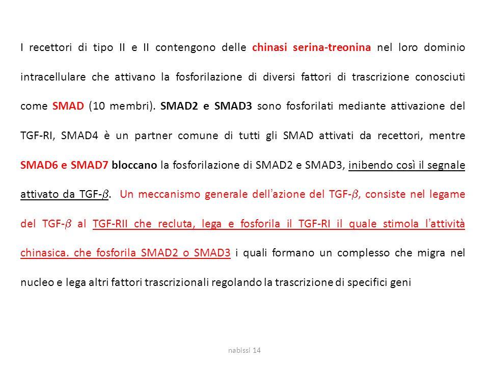 I recettori di tipo II e II contengono delle chinasi serina-treonina nel loro dominio intracellulare che attivano la fosforilazione di diversi fattori di trascrizione conosciuti come SMAD (10 membri). SMAD2 e SMAD3 sono fosforilati mediante attivazione del TGF-RI, SMAD4 è un partner comune di tutti gli SMAD attivati da recettori, mentre SMAD6 e SMAD7 bloccano la fosforilazione di SMAD2 e SMAD3, inibendo così il segnale attivato da TGF-b. Un meccanismo generale dell'azione del TGF-b, consiste nel legame del TGF-b al TGF-RII che recluta, lega e fosforila il TGF-RI il quale stimola l'attività chinasica. che fosforila SMAD2 o SMAD3 i quali formano un complesso che migra nel nucleo e lega altri fattori trascrizionali regolando la trascrizione di specifici geni