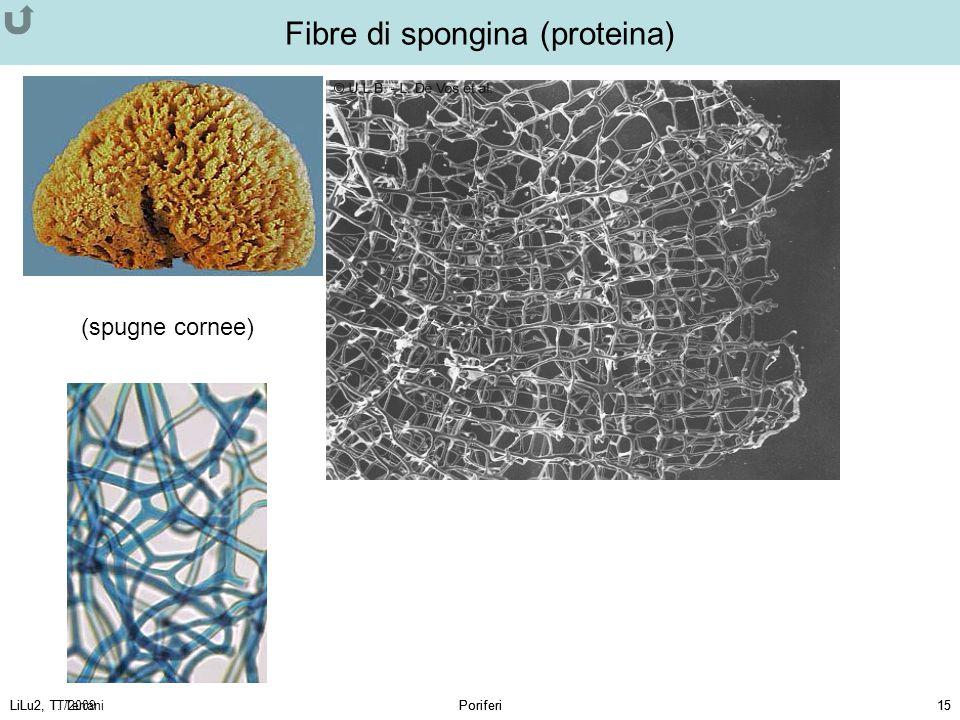 Fibre di spongina (proteina)