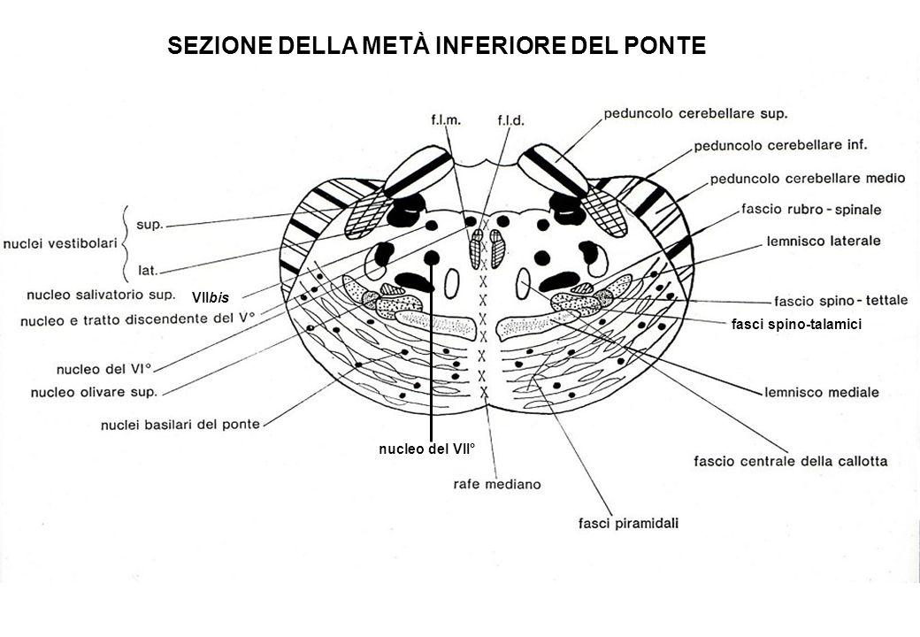 SEZIONE DELLA METÀ INFERIORE DEL PONTE
