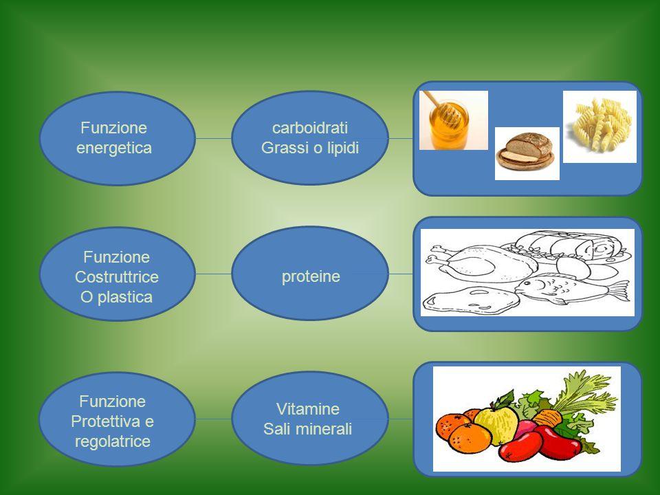 Funzione energetica. carboidrati. Grassi o lipidi. Funzione. Costruttrice. O plastica. proteine.