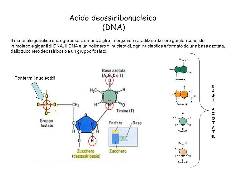 Acido deossiribonucleico