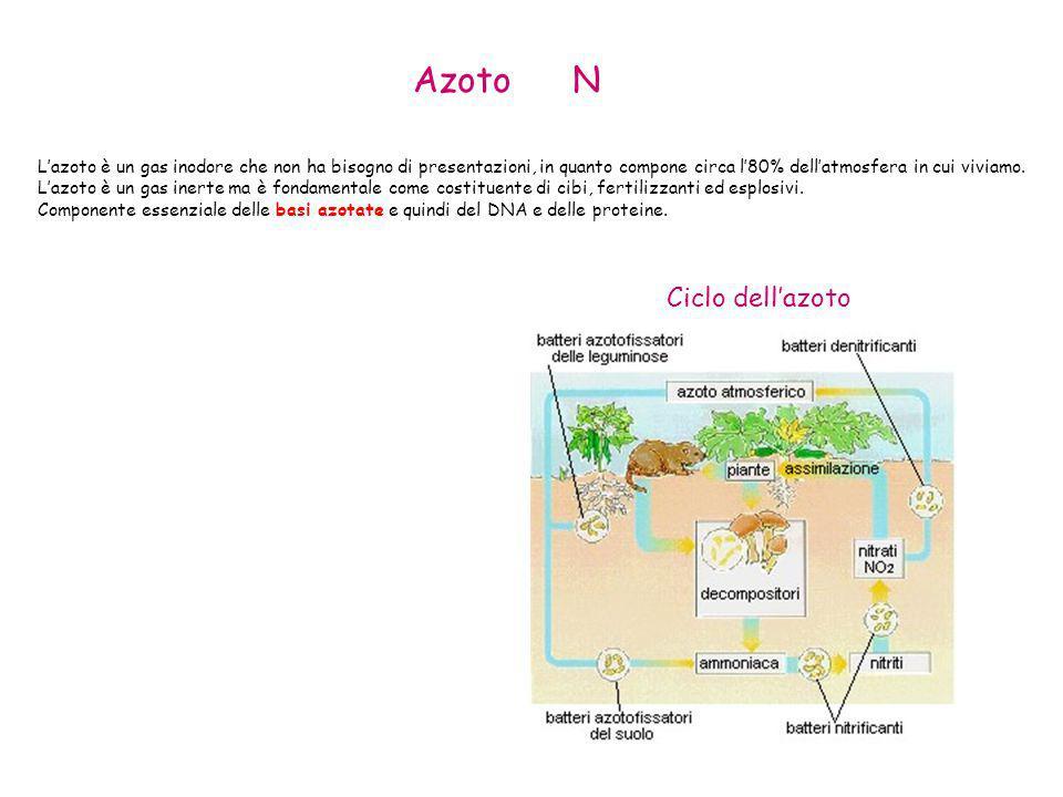 Azoto N Ciclo dell'azoto
