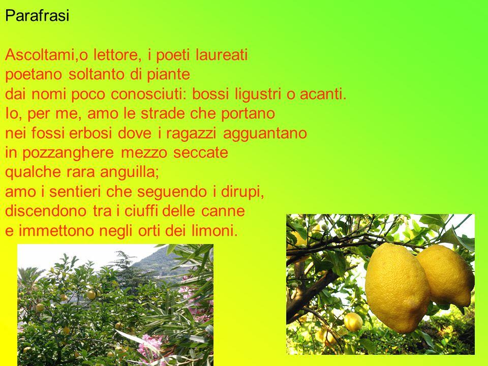 Parafrasi Ascoltami,o lettore, i poeti laureati. poetano soltanto di piante. dai nomi poco conosciuti: bossi ligustri o acanti.