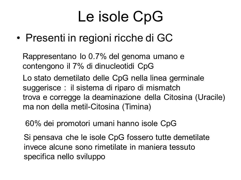 Le isole CpG Presenti in regioni ricche di GC