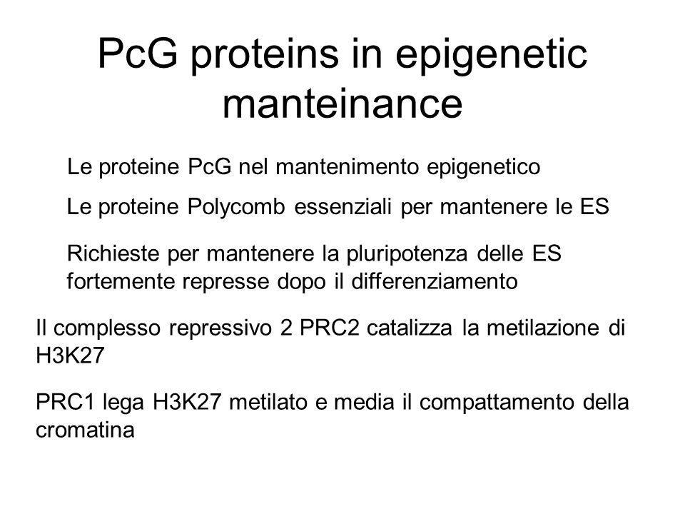 PcG proteins in epigenetic manteinance