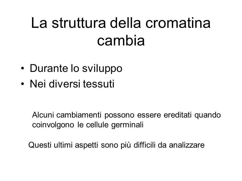 La struttura della cromatina cambia