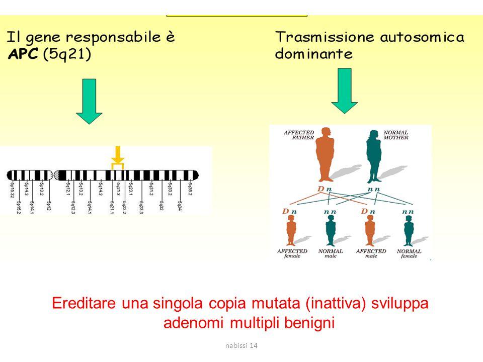 Ereditare una singola copia mutata (inattiva) sviluppa adenomi multipli benigni