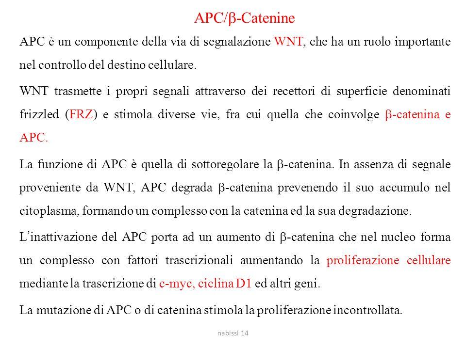 APC/b-Catenine APC è un componente della via di segnalazione WNT, che ha un ruolo importante nel controllo del destino cellulare.