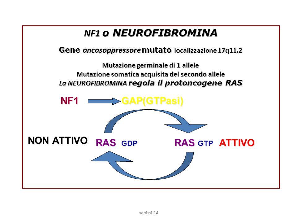 NF1 o NEUROFIBROMINA NF1 GAP(GTPasi) NON ATTIVO RAS RAS ATTIVO