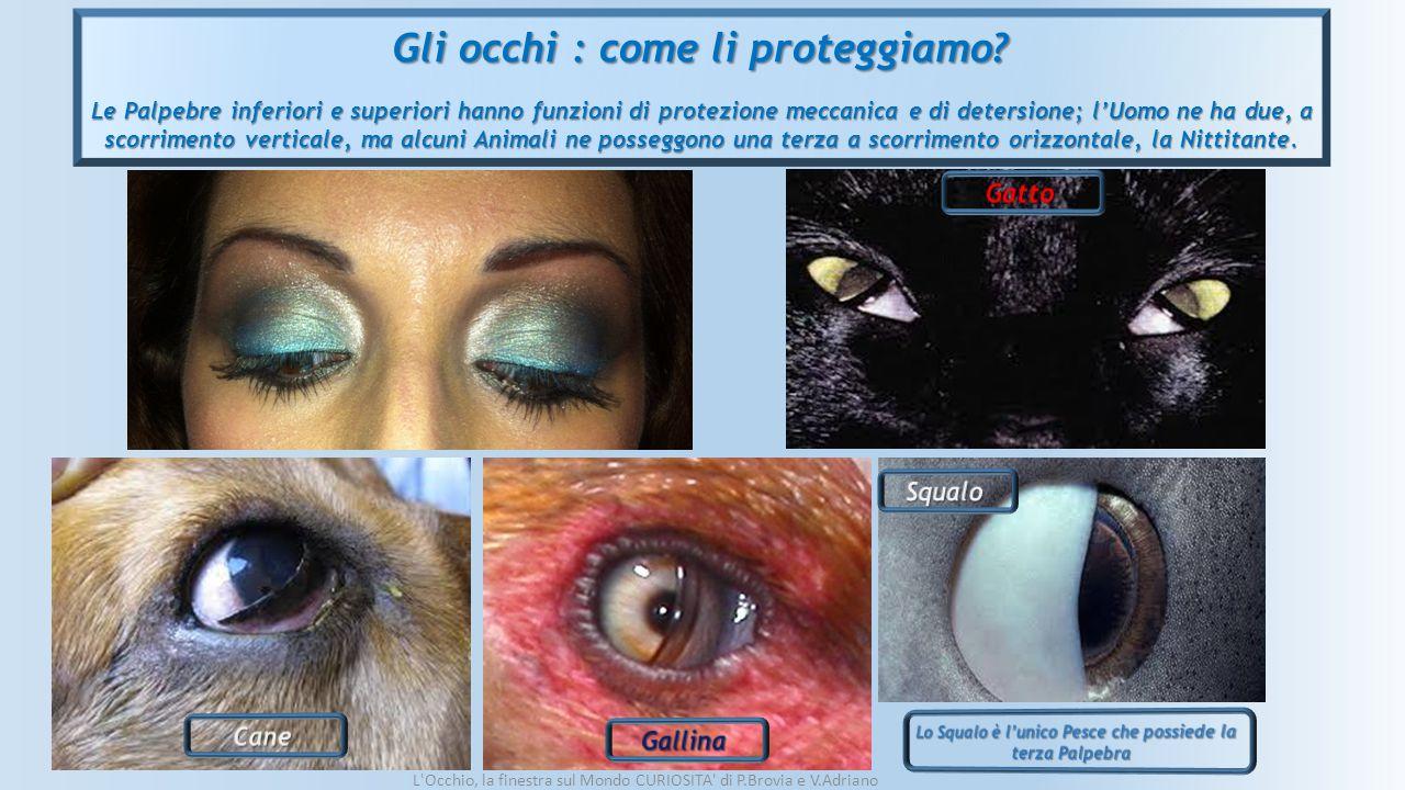 Gli occhi : come li proteggiamo