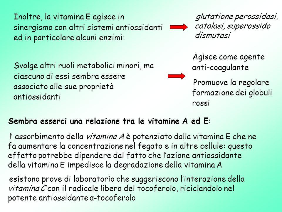 Inoltre, la vitamina E agisce in sinergismo con altri sistemi antiossidanti ed in particolare alcuni enzimi: