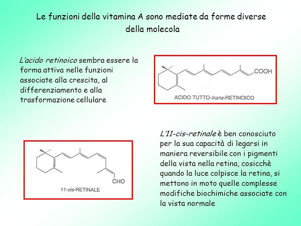 Le funzioni della vitamina A sono mediate da forme diverse della molecola