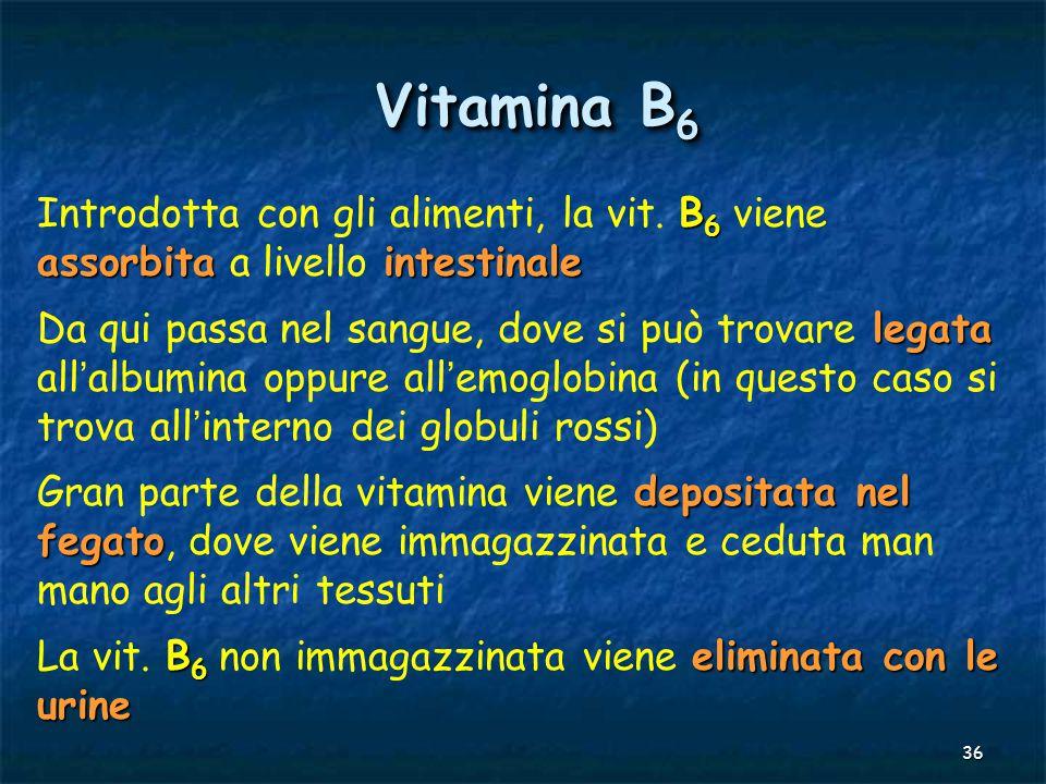 Vitamina B6 Introdotta con gli alimenti, la vit. B6 viene assorbita a livello intestinale.