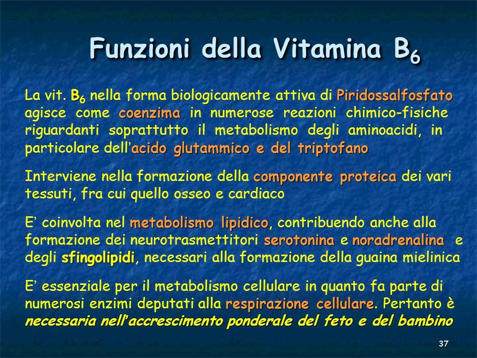 Funzioni della Vitamina B6