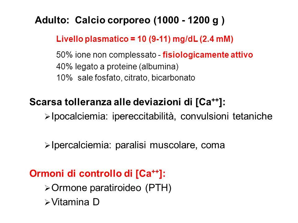 Adulto: Calcio corporeo (1000 - 1200 g )