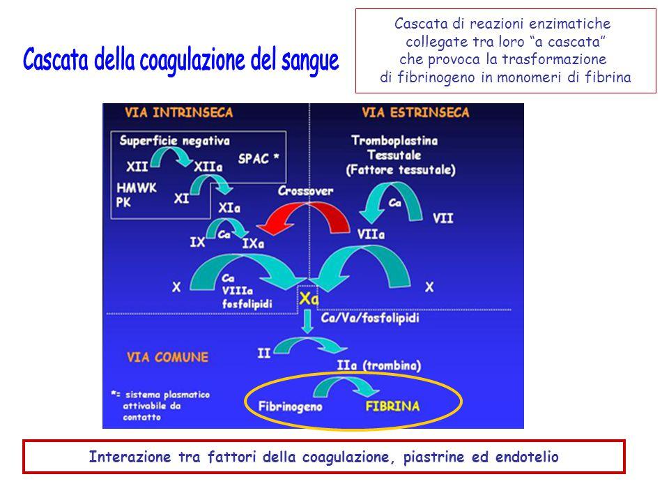 Interazione tra fattori della coagulazione, piastrine ed endotelio