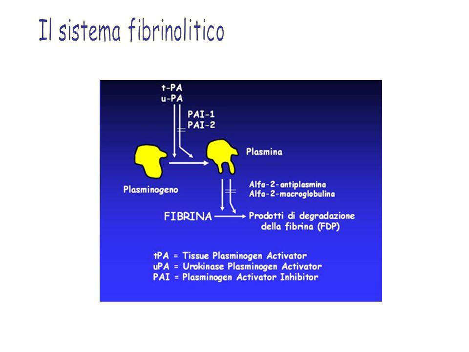 Il sistema fibrinolitico