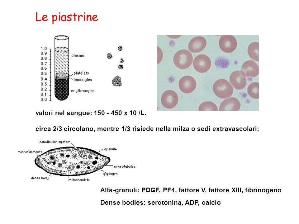 Le piastrine valori nel sangue: 150 - 450 x 10 /L.