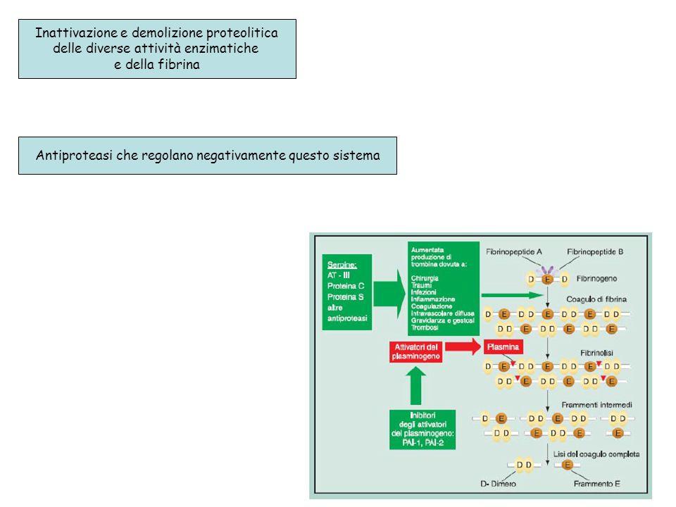 Inattivazione e demolizione proteolitica