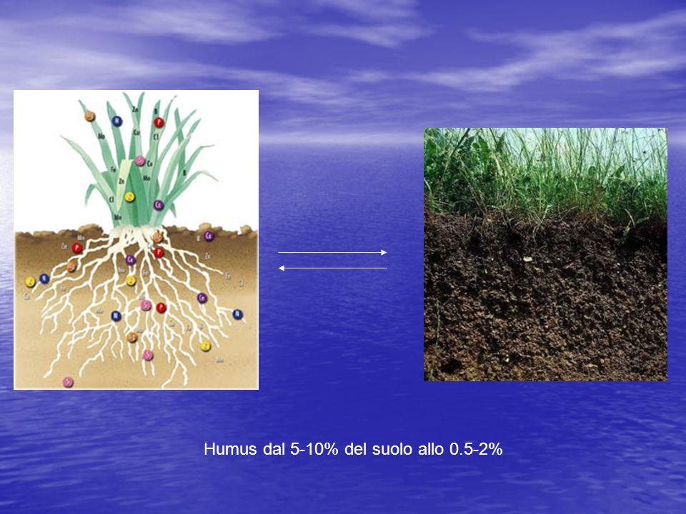 Humus dal 5-10% del suolo allo 0.5-2%