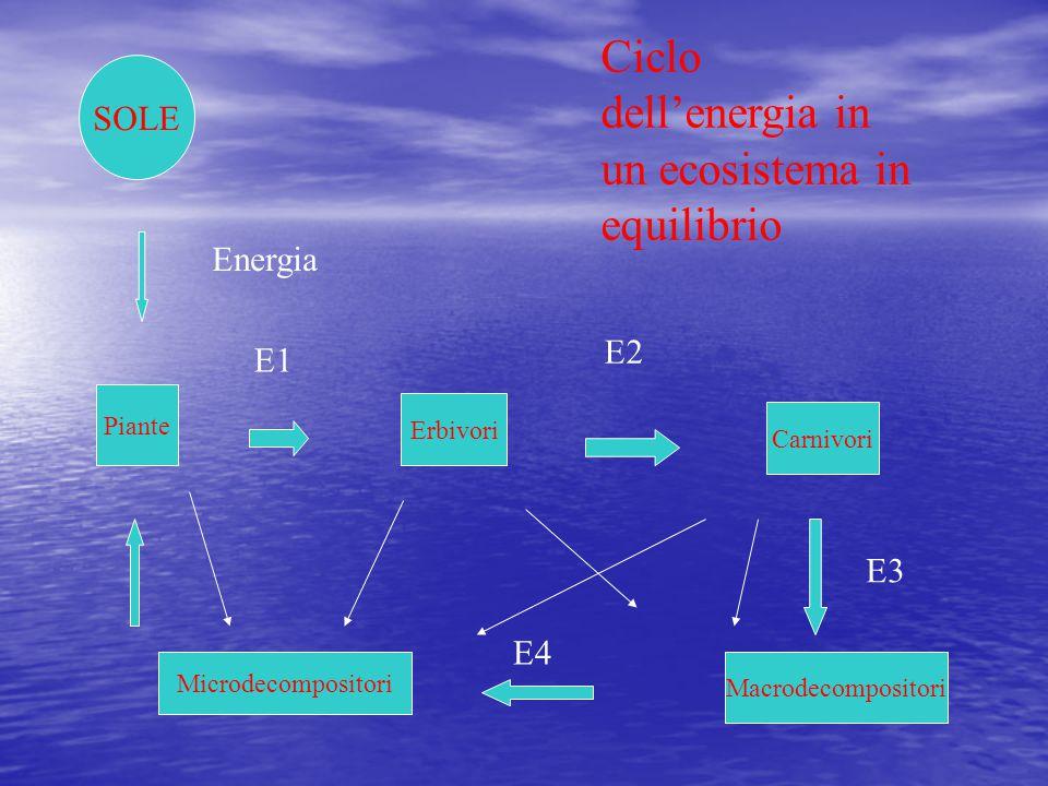 Ciclo dell'energia in un ecosistema in equilibrio