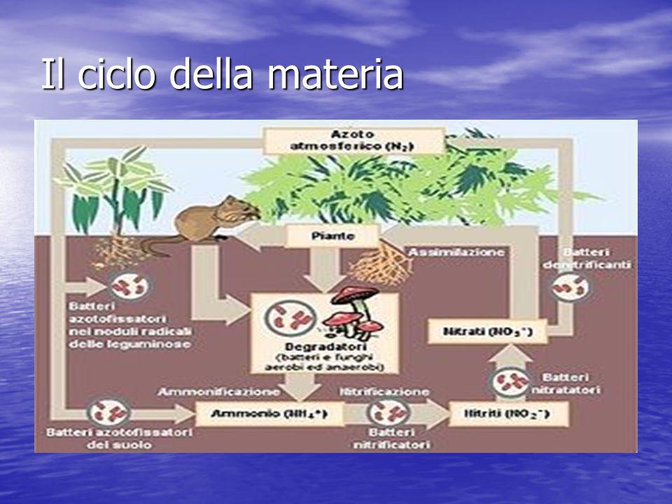 Il ciclo della materia