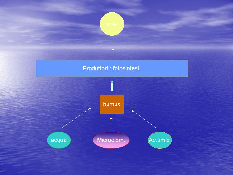 Produttori : fotosintesi