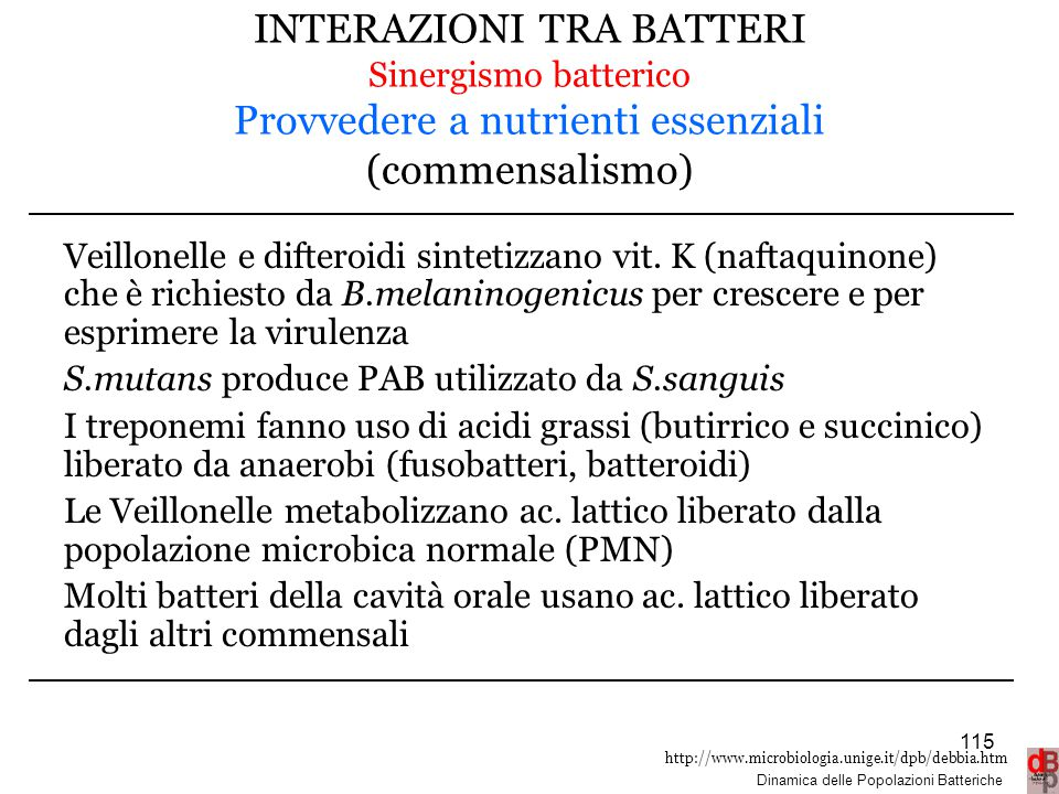 INTERAZIONI TRA BATTERI Sinergismo batterico Provvedere a nutrienti essenziali (commensalismo)