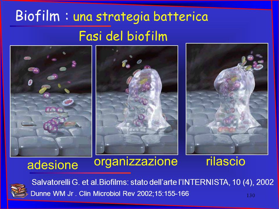 Biofilm : una strategia batterica